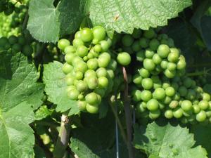 Weinprobe '17